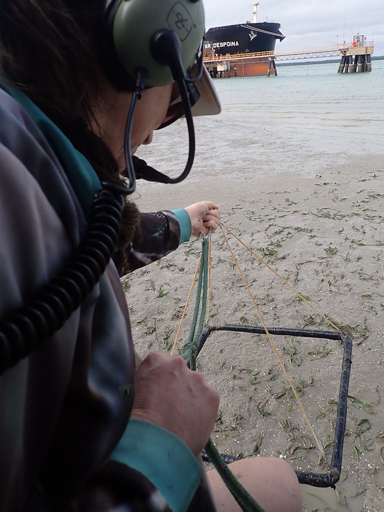 Seagrass monitoring Weipa